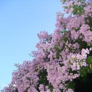 kefalonia - die Blummeninsel