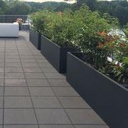 Auch die freistehenden Pflanztröge lassen sich hervorragend zum Sichtschutz zusammenstellen