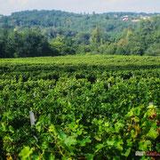 Vignoble des Côtes de Bordeaux, en direction de Carignan-de-Bordeaux. Château Roquebrune, Cénac, 2 octobre 2007