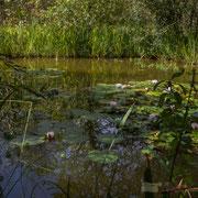 Jardins extraordinaires, jardins de collection, Domaine de Chaumont-sur-Loire