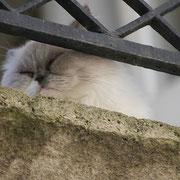 Chat dormant sur balcon. Bordeaux. Reproduction interdite - Tous droits réservés © Christian Coulais