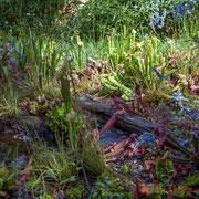 Carnivore Parc; Mathieu ALLAIN, architecte-paysagiste; Stéphane LE GOURRIÉREC, ingénieur-paysagiste, Domaine de Chaumont-sur-Loire. Mercredi 26 août 2015. Photographie © Christian Coulais