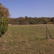 Au fond le talweg puis le clos  de la Mouline. Gratian, avenue du Bois du Moulin, Cénac, Gironde. 16/10/2017