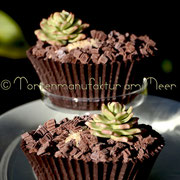 Cupcakes mit Mini-Sukkulenten