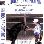 L´education du poulain