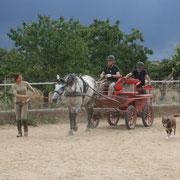 Acostumbrar el caballo a su disciplina: doma, salto, carruaje, horseball, etc...
