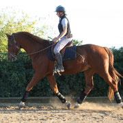 Mejorar el rendimiento, reunion, ligereza y equilibrio en la equitación