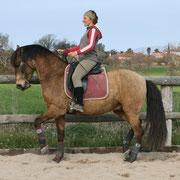 Equitación en equilibrio y armonía