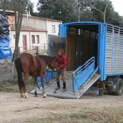 Correción de problemas de conducta del caballo, remolque, tirar atras, etc...