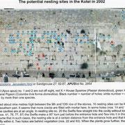 untersuchte Mauersegler-Nistplätze in der Klagemauer