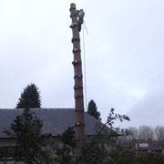 démontage d'un pin à Anderlecht