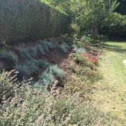 plantation dans un talus à Wavre