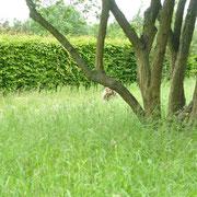 rhs hyde hall wild garden