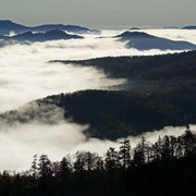 黒岳五号目展望台からの雲海