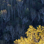 黒岳五号目展望台から紅葉