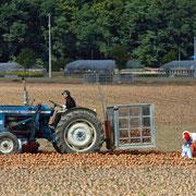 三笠市 玉ねぎの収穫