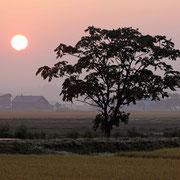 岩見沢市 朝焼けの農村風景