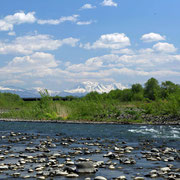 春の忠別川