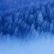 カラマツ林樹氷