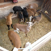 Hier gibt's Quetschhafer und bestes Heu zur freien Verfügung.