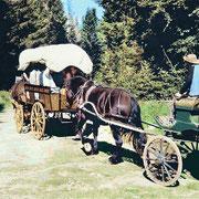 Attelage cheval et chariot baché