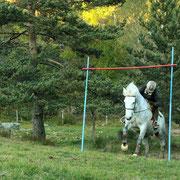 Trec à cheval en Ardèche