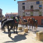 Chevaux en pause sur la place du village en Ardèche