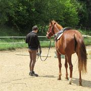 Leçons de cheval en Ardèche