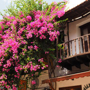Kaş : Bougainvillea-Charme an alten Häusern
