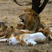 leoni Tsavo Est in2kenya