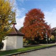 Kapelle und geschützte Rotbuche