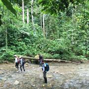 Dschungel-Exkursion im MANÚ Biosphärenreservat