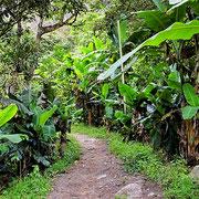 Durch Kaffee- und Bananenplantagen