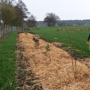 Aber mit viel Geduld und Pflege steht hier bald unser Hühnerwald!