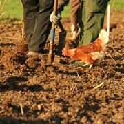 Pflanzlochvorbereitung unter Aufsicht