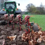 Die Hühner können es kaum erwarten...