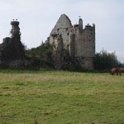 Les cigognes du chateau de Saint Fromond