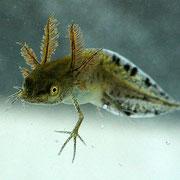 Личинка. Photo Piet Spaans
