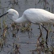 Photo Birdman1 at Wikimedia Commons