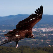 Photo Isthar at Wikimedia Commons