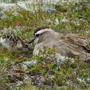 Самец с птенцом. Photo Lutz Lücker