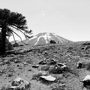 2020 (rando) - Les 3ème et 4ème semaines d'une drôle d'année qui avait donc pourtant bien commencé : volcan Lonquimay (Chile)