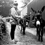 2018 (boulot) - Pied à terre à Loquéran devient Naéco-Audierne et change donc de propritaire, les ânes mettent le cap sur la pointe du Raz