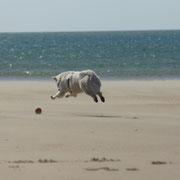 Hund rennt Ball hinterher