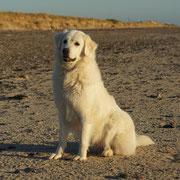weisser Hund sitzt am Strand