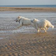 2 weisse Hunde rennen am Stand