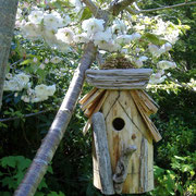 From Florence, this bird house had three broods in a row! April-July 2011