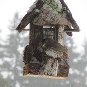 Here is the Song Sparrow blending in with the feeder 2014