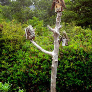 From the Goularte's in Florence, the highest compliment: a whole driftwood display for their Given Back bird houses.