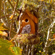 Fall 2010, after Chickadee family residents finished with this house